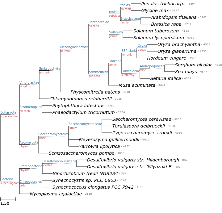 Ete ncbiquery fast and handy queries to the ncbi taxonomy database dumping descendant taxa tree stopboris Images